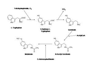 biosynthese-melatonin