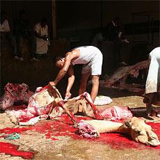 kamelschlachten