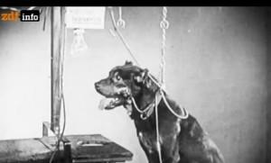 pawlowscher-hund