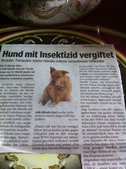 hund-mit-insektizid-vergiftet