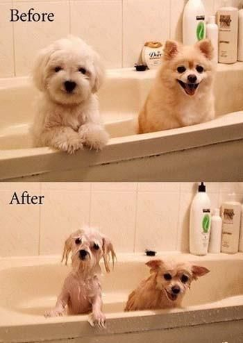 hundebad