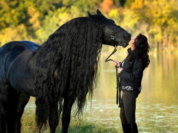 pferdeschoenheit
