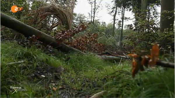 was ist los im Deutschen Wald-38-downburst