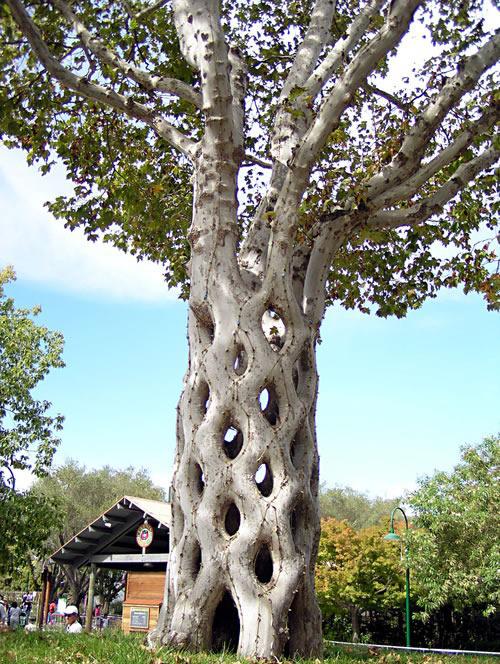 Baum geformt3