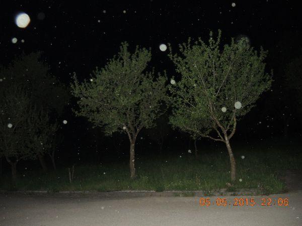DSCN2421 r-orbs-in-landschaft-karl-kl