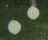 DSCN2426-as-orb-struktur-eierstock-form-oval-karl-kl