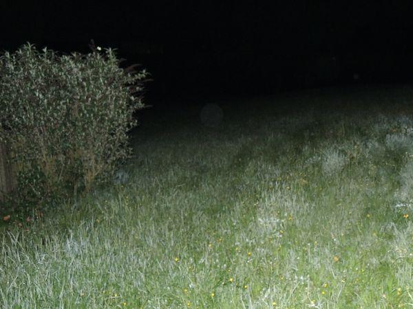 DSCN2493 r-blasse-orbs-in-landschaft-kl