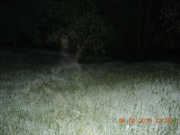DSCN2709 r-orbs-schleier-in-landschaft-karl-kl