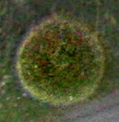 orb-farbe-gruen-struktur-gepunktet-as