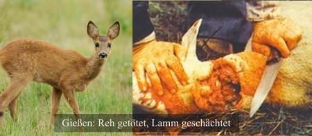 Reh-Lamm-450x196