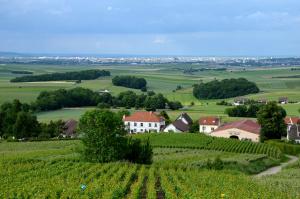 Weinberge Reims
