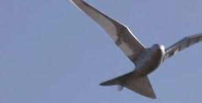 drohne-als-vogel-getarnt1