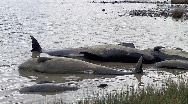 w3000 - 2012-11 - 90 Wale und Delphine in Australien verndet
