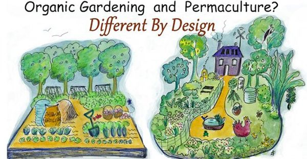organic-gardening-and-permaculture