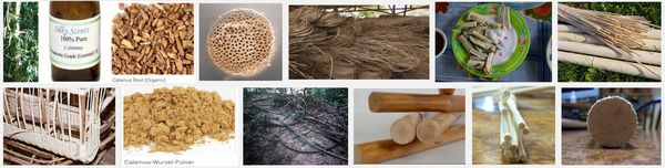 rattan-palme-calamus-produkte