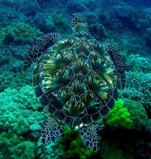 turtles-besonders