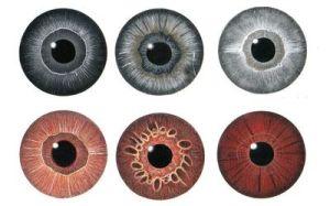 Irisdiagnose-k